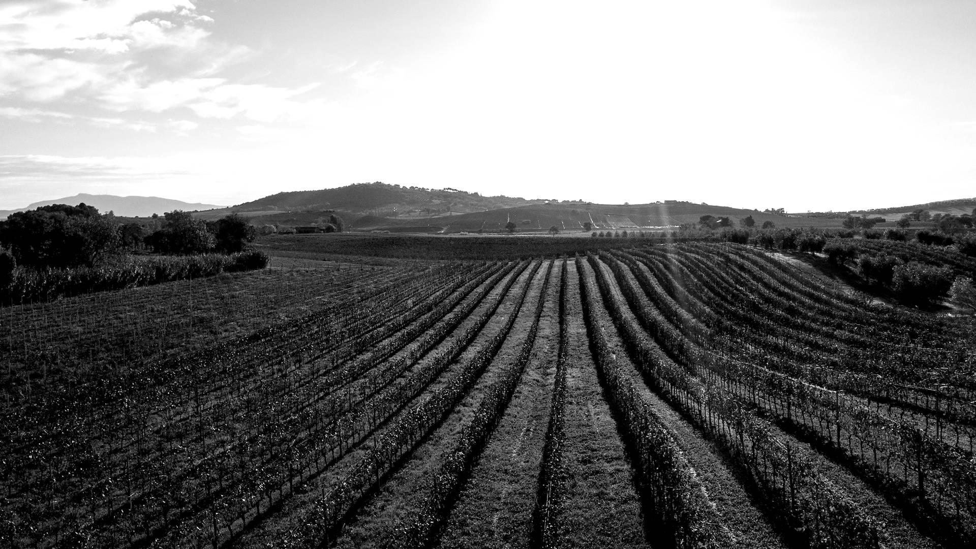 Azienda Bruni - Azienda Vitivinicola in Maremma